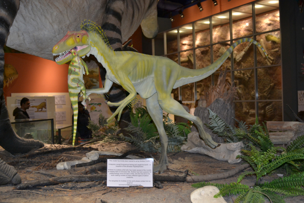 Inside dino isle photo by Philip Bell